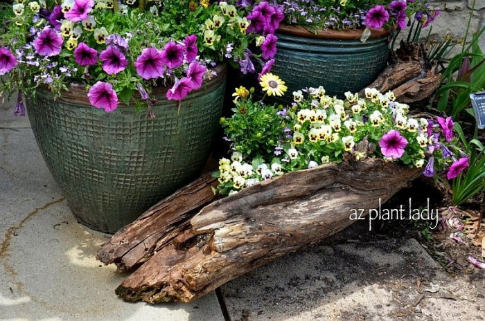 44704b258ff1e4caf276426060aaa5a2_Colorful-flowers-planted-in-a-log-700x464